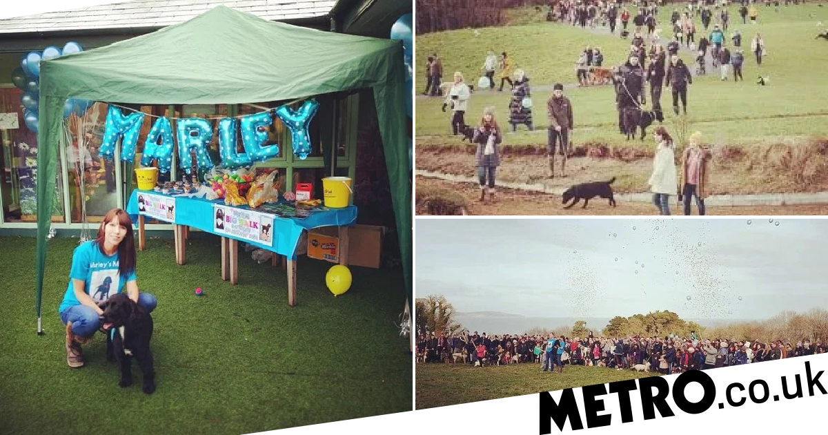 400 dogs turn out to support dying pooch Marley on one of his final walks