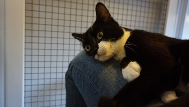 abigail the cat at mayhew animal home