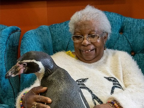 85-year-old woman's wish to meet a penguin comes true thanks to care home