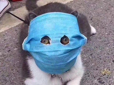Cat given makeshift face mask to protect it from coronavirus