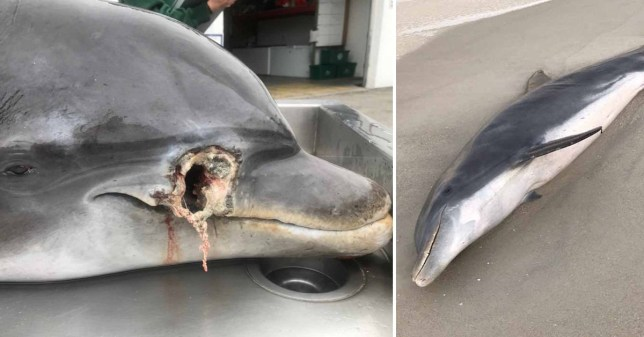 Dolphins shot in Florida