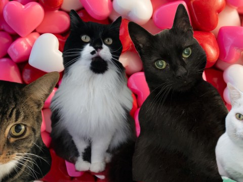 These unwanted cats are desperate to find their perfect match this Valentine's Day
