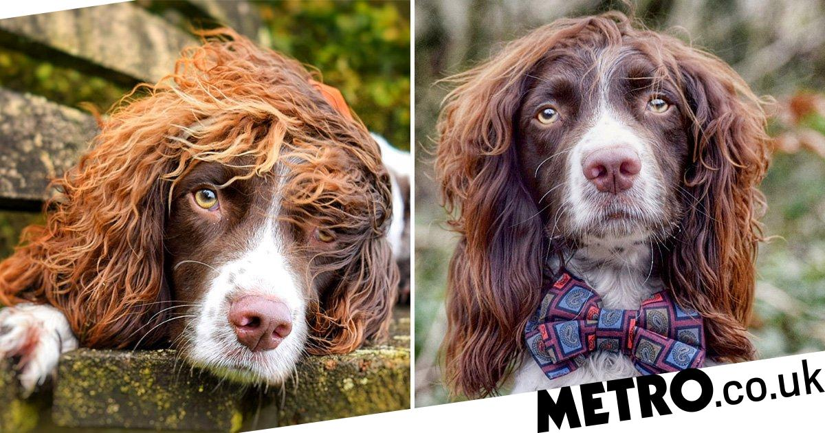 Dog has such great hair he became an Instagram model