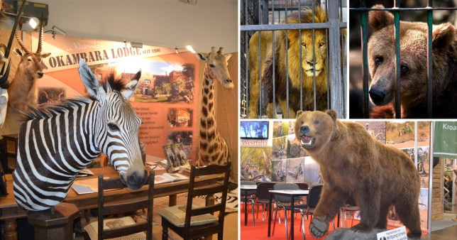 Last chance to vote for trophy hunting ban which could save 2,000 endangered animals