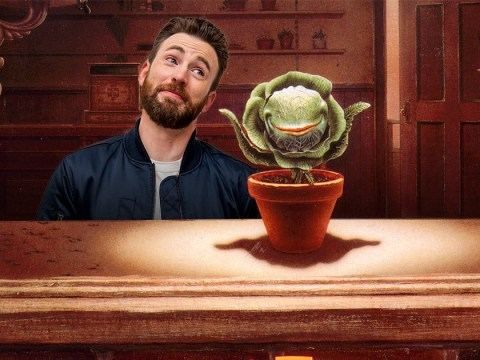 Chris Evans 'in talks' to star in Little Shop of Horrors movie remake as Dr Orin Scrivello