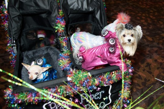 Two dogs sat in a stroller wearing fabulous outfits in pink and blue at the New York Pet Fashion Show