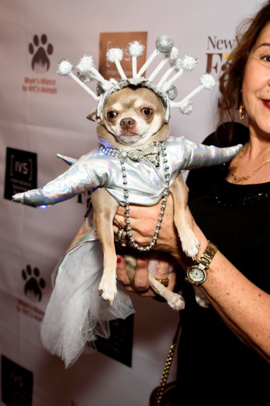 A dog wearing a silver outfit, looking like an alien at the New York Fashion Show