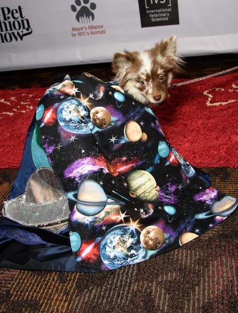 A dog wearing a cape with planets on it