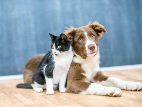 Animal rights activists want to ban the term 'pets' as cats and dogs are our 'equals'