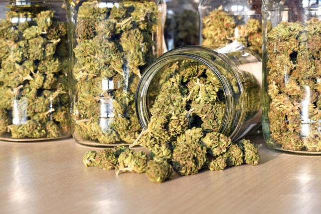 Dry and trimmed cannabis buds stored in a glas jars. Medical cannabis.; Shutterstock ID 767447821; Purchase Order: -