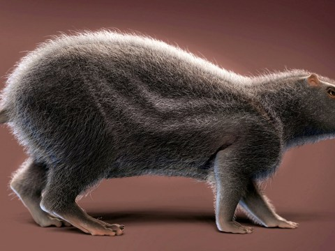 Gigantic prehistoric rat the size of a human once walked the Amazon rainforest