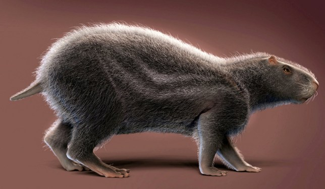 ***EMBARGOED UNTIL 00.01 GMT, WED FEB 12TH (19.01 ET, TUES 11TH)***MANDATORY PICTURE CREDIT*** An artistic reconstruction of Neoepiblema acreensis. See National News story NNrat. A giant prehistoric rat as big as a HUMAN that lived in the Amazon rainforest 10 million years ago has been unearthed by scientists. It weighed nearly THIRTEEN STONE and reached five feet in length - making it the biggest rodent ever to roam South America. Named Neoepiblema acreensis, it had two huge curved incisor teeth for gnawing nuts and prey. The skulls of two individuals were found at a fossil site at Acre in the western Brazilian Amazon.