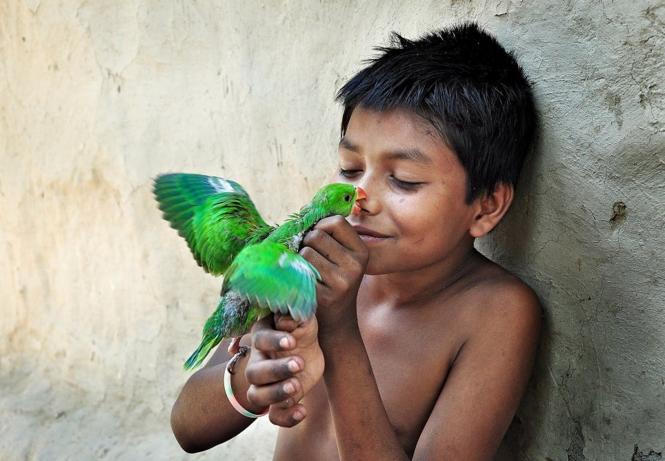 'Love bite' by @pranab_basak - During the summer storm season in the rural area of Bengal, parakeet nests often get destroyed. This parakeet baby bird got rescued by this rural kid who takes care of it with so much love and kindness. Location: Majhdia, West Bengal, India. See SWNS copy SWCAlove: A world-wide photo contest challenging people to capture the 'essence of love' through a camera lens has produced this stunning series of images in time for Valentine's Day. Nearly 12,000 photographers across the globe entered the #Love2020 contest hosted by free-to-use mobile app Agora. And the 50 final entries picked by judges prove that indeed, love is a many splendid thing.