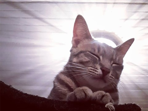 Celebrate Easter with these pictures of cats looking holy and godlike