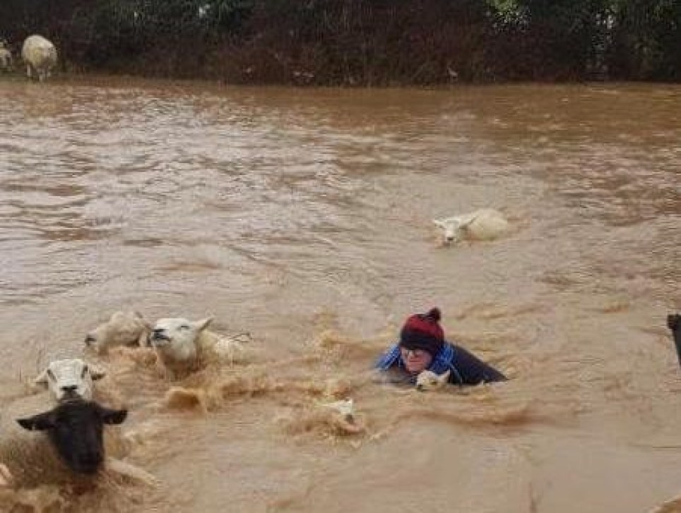 Farmer saves lambs from drowning in floods during Storm Dennis