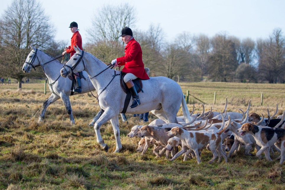 Cirencester, England - December 26, 2016: Huntmaster arriving with the pack of hounds at the annual Boxing day gathering of The Vale of the White Horse Hunt in Cirencester Park, Cirencester