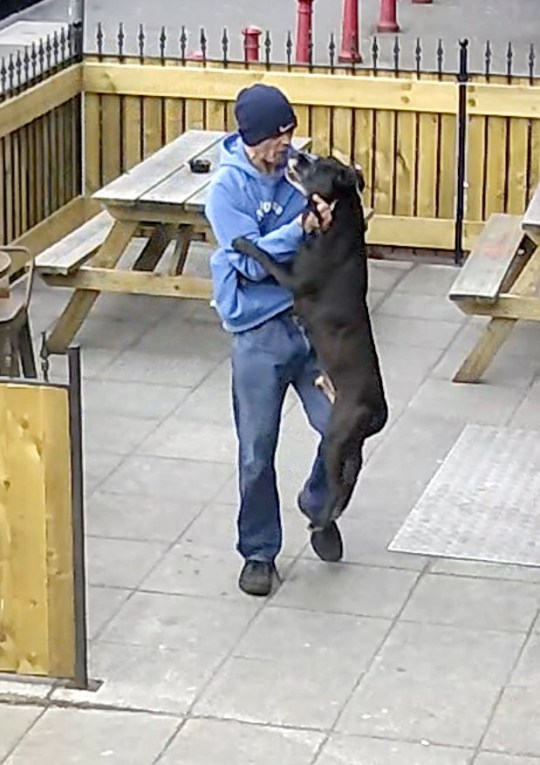 BNPS.co.uk (01202 558833) Pic: BuffaloBar/BNPS Jamie Hill picks up his dog by the neck after hitting the animal. Police have issued a wanted appeal for a man accused of carrying out a savage attack on a dog that was caught on CCTV.??????Jamie Hill, 40, has been charged in connection with the incident that saw a man pick up the dog by its neck, punch it and then slam it into railings.
