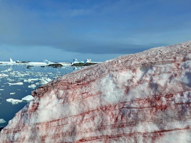 Red snow near Vernadsky research station, pictured in February 2020.