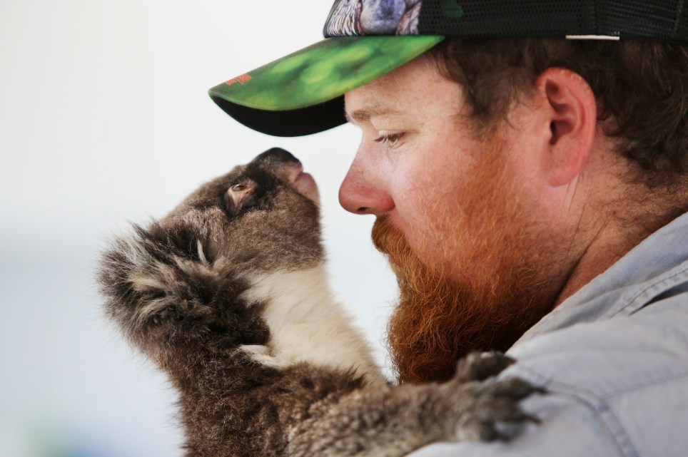 PARNDANA, AUSTRALIA - FEBRUARY 21: Sam Mitchell, owner of the Kangaroo Island Wildlife Park comforts a koala joey affected by the recent bushfires on February 21, 2020 in Parndana, Australia. The Kangaroo Island Wildlife Park has treated 600 animals since the fires, 95% being koalas. Over a third of Kangaroo Island, including much of the Flinders Chase National Park, was burnt during the recent bushfires that started on 4 January. Two people lost their lives, while tens of thousands of native animals and farming livestock were also killed. The Wildlife, Ecosystems and Habitat Bushfire Recovery Taskforce estimates as many as 90 percent of Kangaroo Island's famous koala population perished in the recent bushfires, with only 5,000 to 10,000 koalas remaining in the area from an original population of about 60,000. Kangaroo Island's economy is reliant on agriculture and tourism worth an estimated 180 million dollars and focus is now turning to reviving the industries post the bushfires. The South Australian Tourism Commission launched the #BookThemOut campaign to encourage tourists to visit the bushfire affected areas in the Adelaide Hills and Kangaroo Island, with the recent Kangaroo Cup Racing Carnival reaching record attendance this past weekend. However, with the Island known to be a popular tourism destination for Chinese tourists the local industry is now also being heavily affected by coronavirus. The Federal Government has announced a royal commission into this summer's devastating bushfires across Australia, with a specific focus on preparedness for future bushfire seasons. Former Australian Defence Force (ADF) chief Mark Binskin, former Federal Court judge Annabelle Bennett and leading environmental lawyer Andrew Macintosh are due to deliver their findings by the end of August. (Photo by Lisa Maree Williams/Getty Images)
