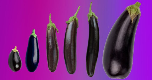 A variety of different-sized aubergines