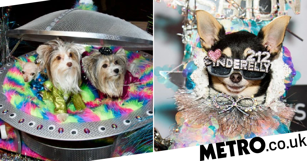 New York Pet Fashion Show: Dogs wow in futuristic space fashion