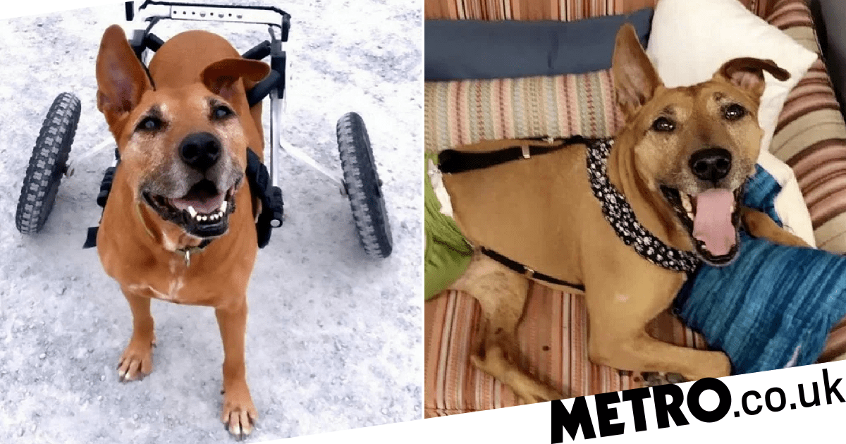 Dog who lost her leg after a stroke won't let it break her spirit