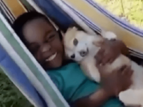 Tiny rescue Chihuahua wins over little boy who was terrified of dogs