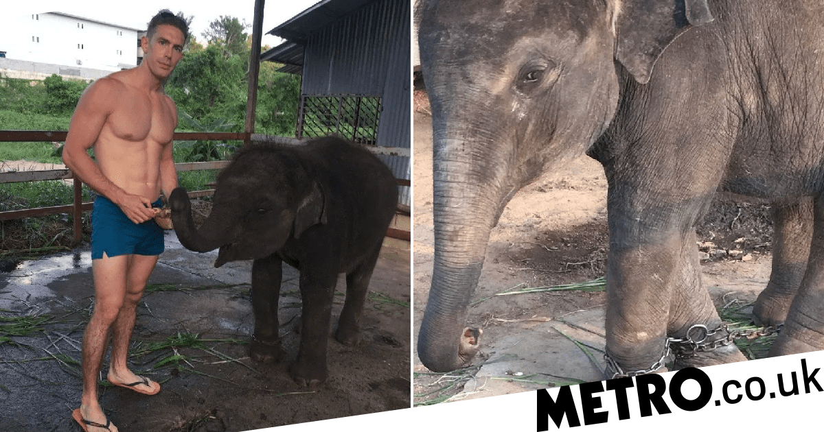 Baby elephant's legs chained together 'when it's not begging for money'