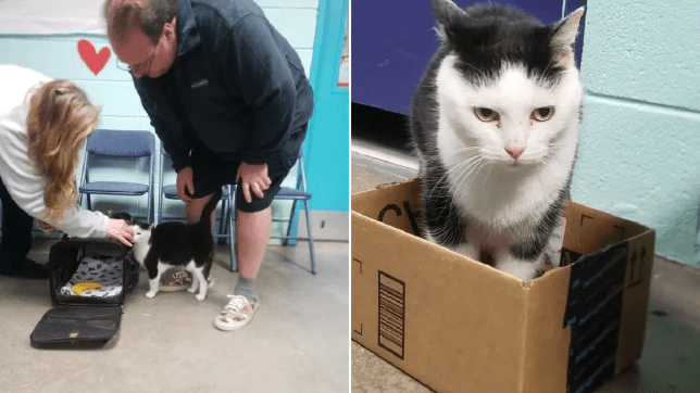 Perdita the 'world's worst cat' finally finds a new home