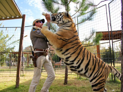 Tiger King: Is G.W. Zoo still open and where are all the tigers now Joe Exotic is in prison?