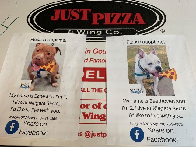 Dog adoption fliers on pizza box