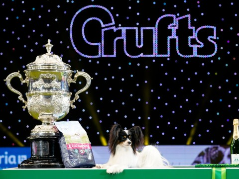 Crufts 2020: What are the current Best in Show winner odds and how can you watch at home?