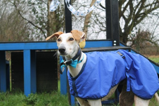 henry the dog at battersea after makeover