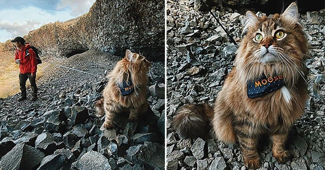 Meet the cats who go on adventures around the world with their owners
