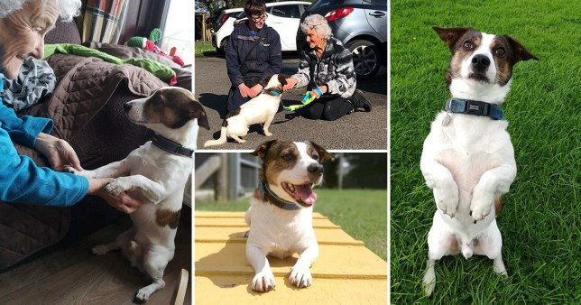 Split images of Smithy the dog and his owner
