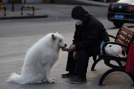 A man wears a face mask as a preventive measure against the COVID-19 coronavirus as he feeds water to his dog on a sidewalk in Beijing