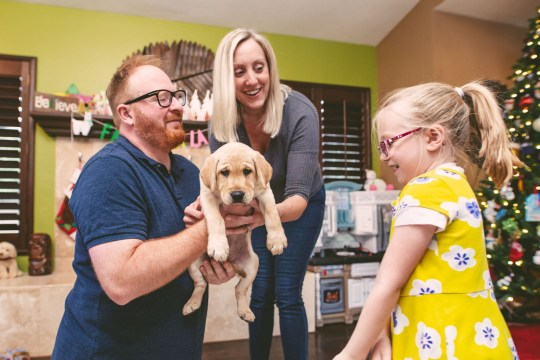 David and Alicia Tschirhart taking delivery of their new cloned dog Ziggy. See SWNS story SWNYziggy. A family paid a whopping $50,000 to CLONE their heroic dog who saved its pregnant owner from a rattlesnake. David and Alicia Tschirhart decided to genetically duplicate their beloved Labrador retriever Marley after the pooch passed away just months after saving Alicia from a venomous snake. The couple preserved Marley???s DNA but waited five years to clone the hound as they wanted their children Madeleine, five, and Colette, three, to be old enough to appreciate a dog. The family, of San Diego, California, welcomed Ziggy, now four months, in December, and were astonished by how similar the canine was to the original Marley.