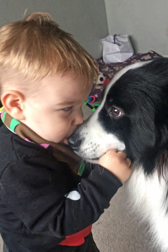 PIC BY LAURA WEBSTER / CATERS NEWS AGENCY (PICTURED- Jenson giving Fenn a kiss when they were very young) -From brushing their hair to reading a bed time story, one little boys connection with his pet dog goes further than most Their bond is so close that little Jenson Webster, two, from Hinkley, Leicester, sees his border collie mix dog Fenn, as his brother - and mimics him in almost all aspects of life. Jenson was born on the October 8 2017 - with Fenn being born just nine days later, on October 17 - and strangers are often in awe of the bond - as the pair are rarely seen apart. The family decided initially, to get Fenn as a companion to grow up alongside their son - but they never envisioned how close the two would become. -SEE CATERS COPY