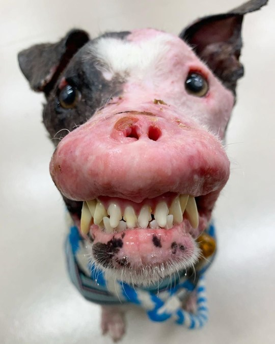 Stray dog with disfigured face