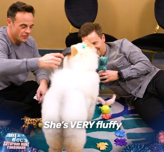 Ant and Dec playing with dogs is the video the world needs right now