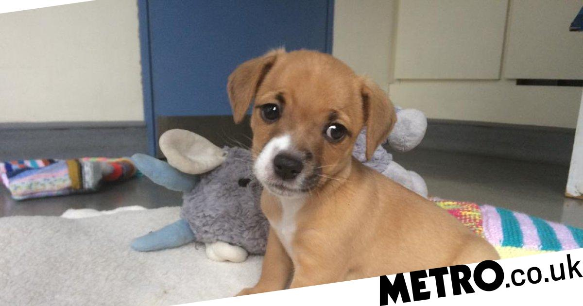 Hand-reared puppies rejected by mum bringing cheer to shelter staff