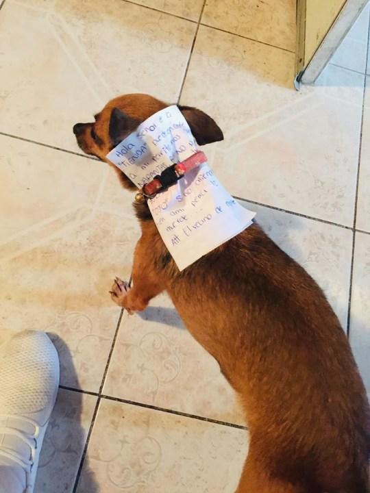 Dog fetches quarantine snacks for owner. Antonio Munoz.
