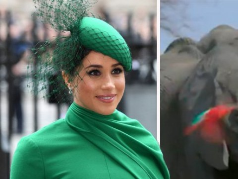 Meghan Markle to voice new Disney documentary Elephant in first gig after quitting as senior royal