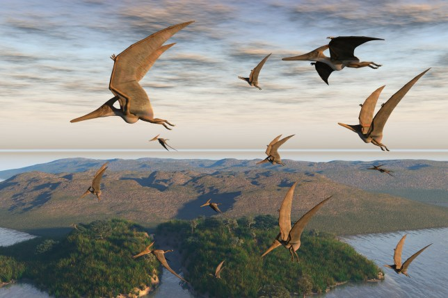 Flying reptiles lived in the Sahara millions of years ago