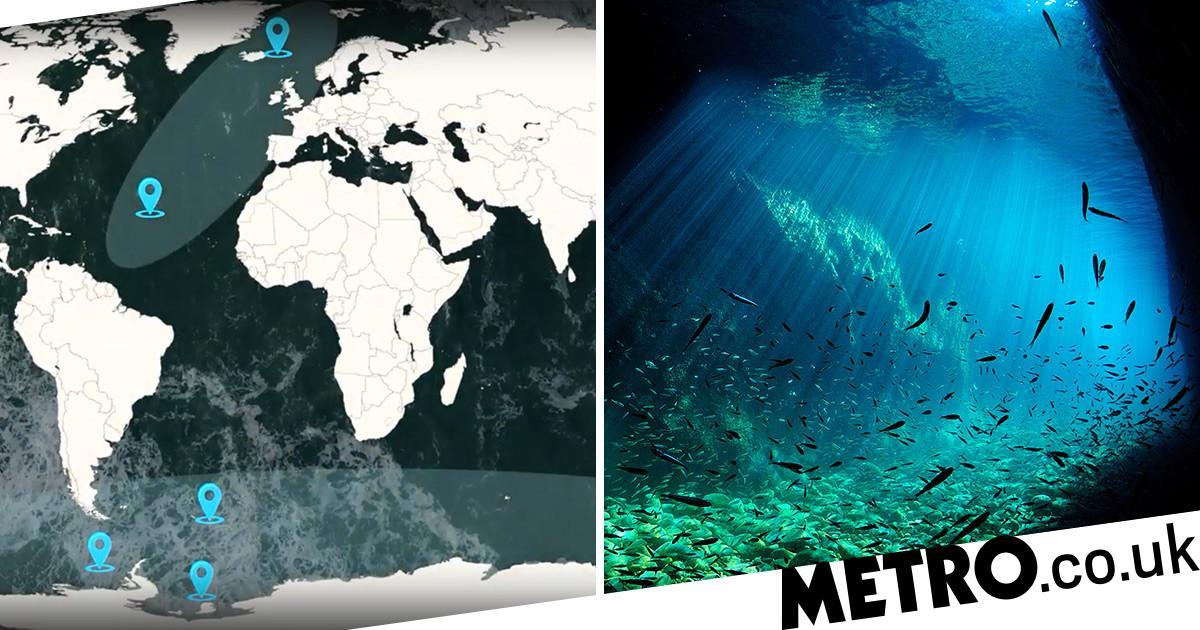 Marine species 'relocating towards the poles' due to rising temperatures