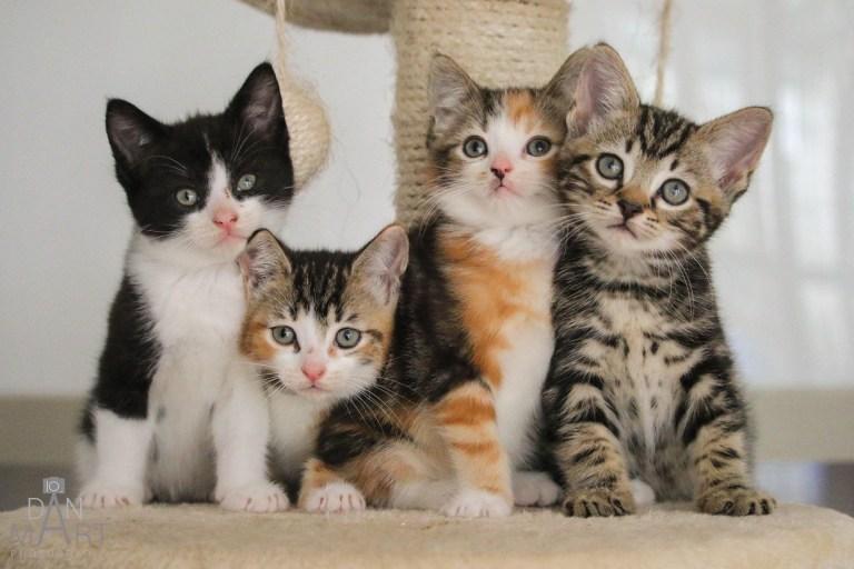 Ashbourne Animal Welfare