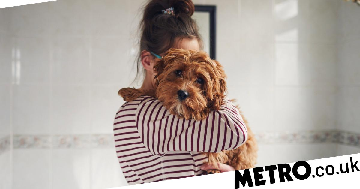 Pets' mental health may suffer during coronavirus lockdown