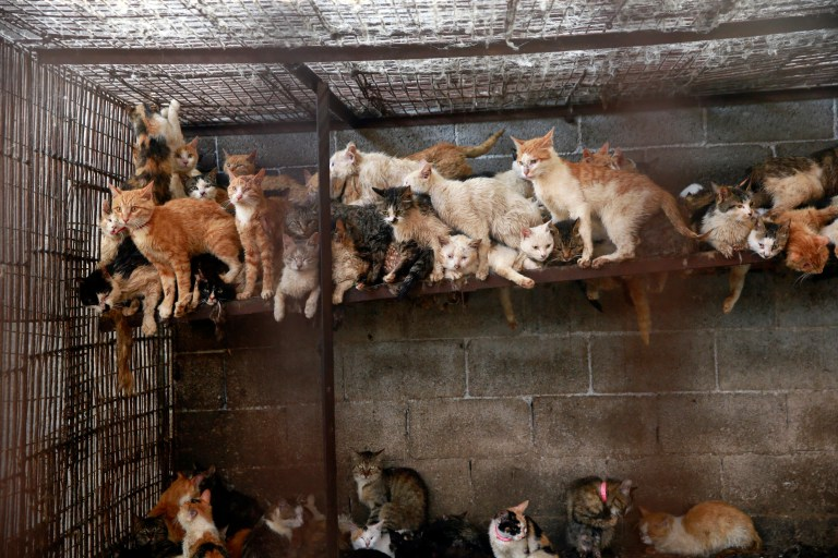 Cats crammed together in a cage in the slaughterhouse