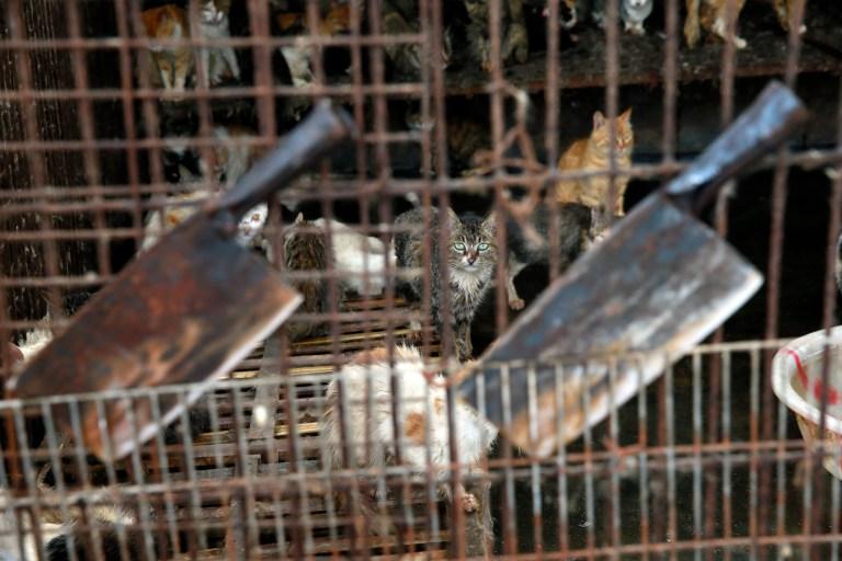 Cats behind bars at the slaughterhouse