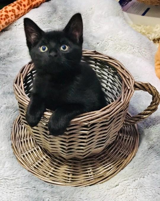 lofty the kitten
